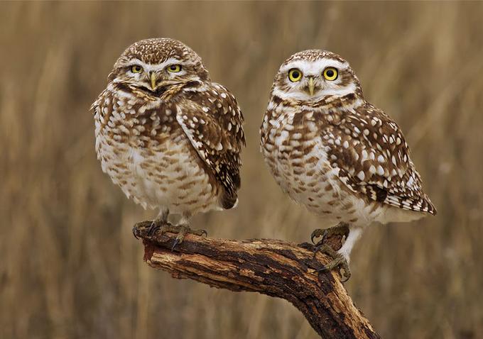 La Abuela Piku y la Tia Margarita by MarioFiorucci - Beautiful Owls Photo Contest