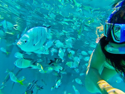 Swimming with the fish at Lady Musgrave Island