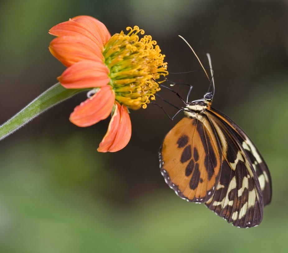 A butterfly feeding on a flower