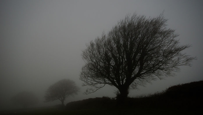 Exmoorfog by pnewbery - Silhouettes Of Trees Photo Contest