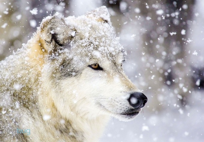 Strong and proud. by brandinichols - Snowflakes Photo Contest