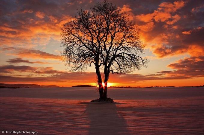Christmas (Eve) Tree by davidrelph - Silhouettes Of Trees Photo Contest