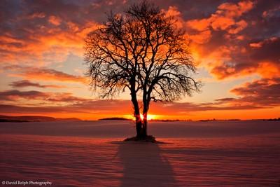 Christmas (Eve) Tree