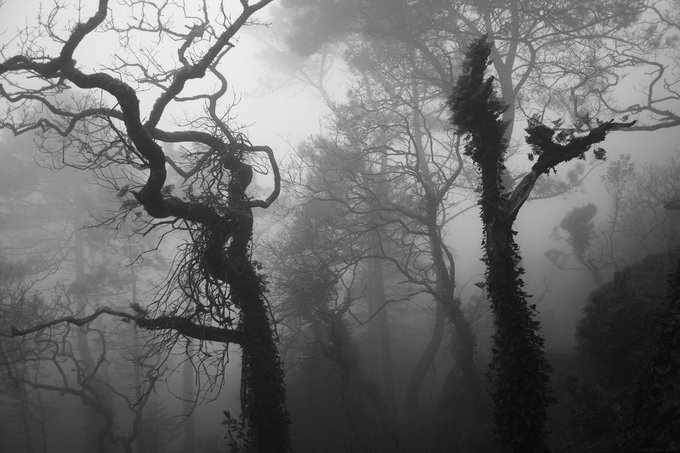 Forest of Lost Souls by sunseaguls - Dark Forest Photo Contest