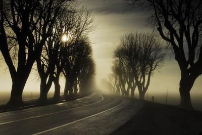 Morning Fog in Spreckels, CA