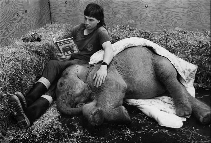 KAHRA by LLOYDWRIGHT - I Heart Animals Photo Contest