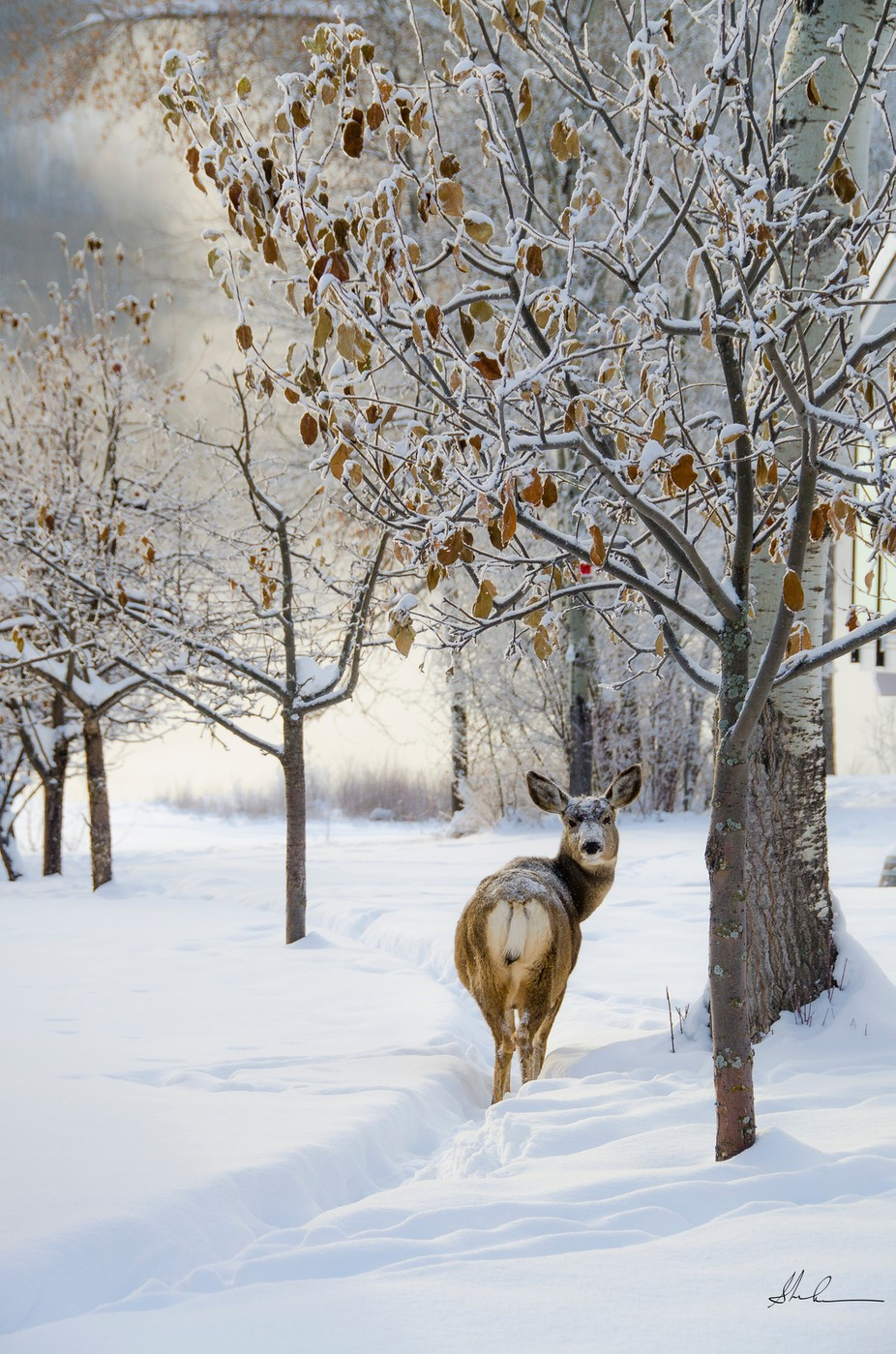 Looking Back by Peaceofthenorth - Winter Wildlife Photo Contest