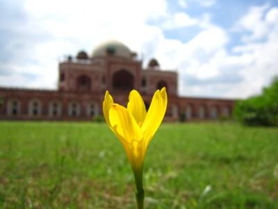 Flower @ Humayun