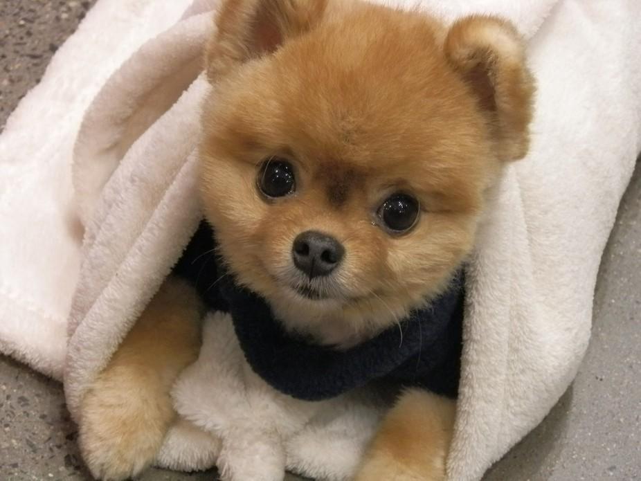 Jiff awakes in his blanket