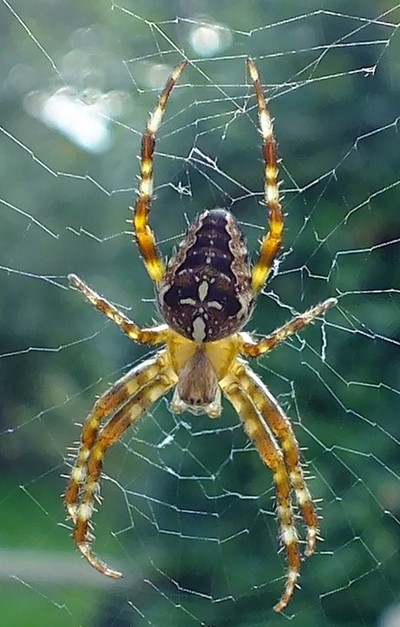 Oh what a tangled web we weave !!