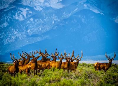 Lots-of-Antlers