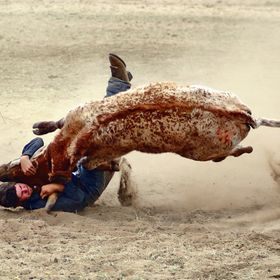 Competing in the Steer Wrestling at the Hamilton Rodeo in Tasmania.