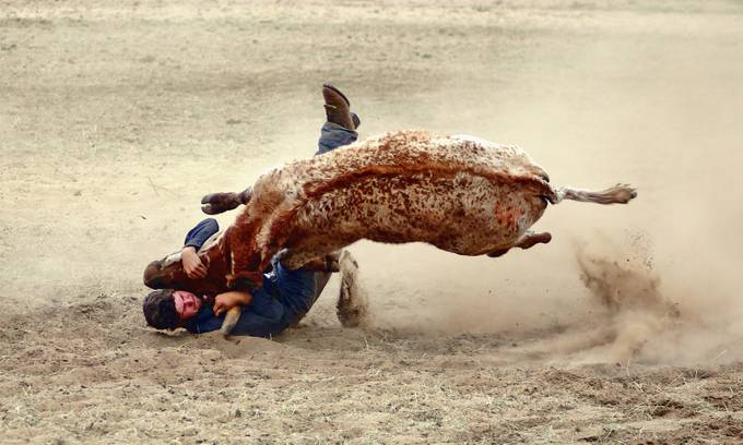 Steer Wrestler by julienjohnston - Show Movement Photo Contest