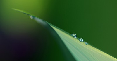 Droplets on Green 1