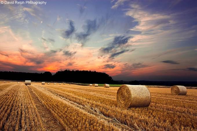 I Wanted Stars by davidrelph - Dry Fields Photo Contest