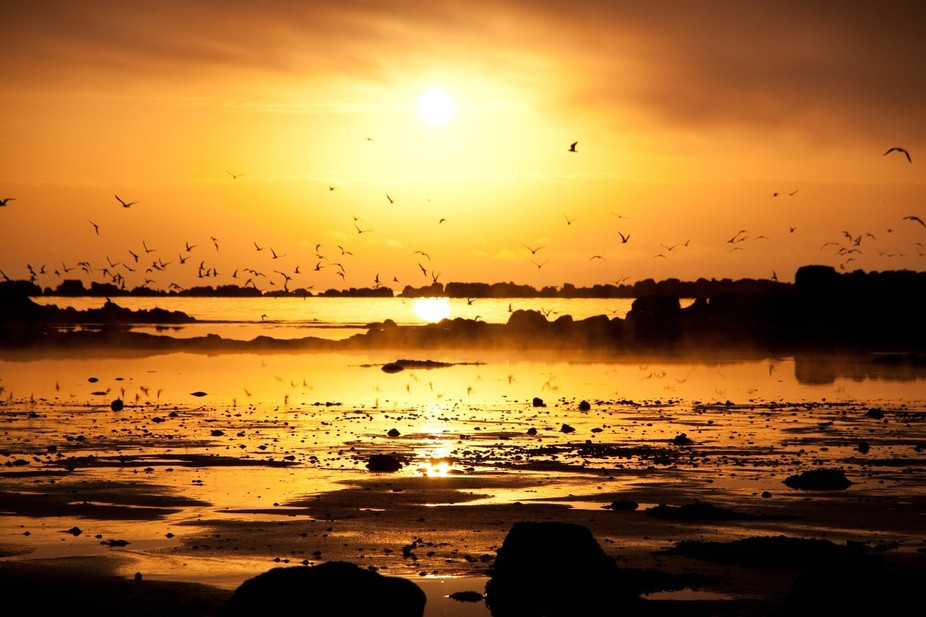 Arctic terns in the sunset