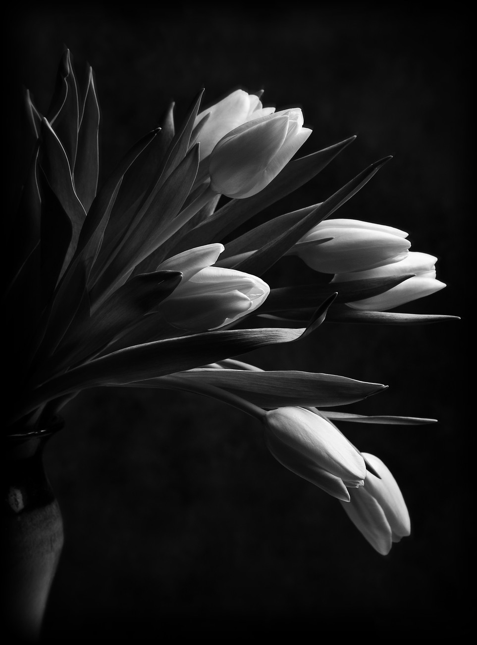 Black And White Flowers Enjoy The Photo Contest Winners Blog