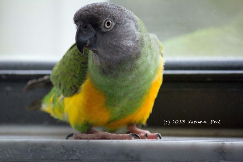 Window Light Portraits Birds 018_copyrightedited-1_edited-1
