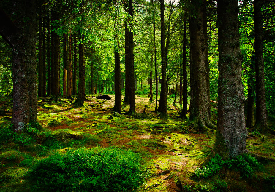 A beautiful Forest in Norway