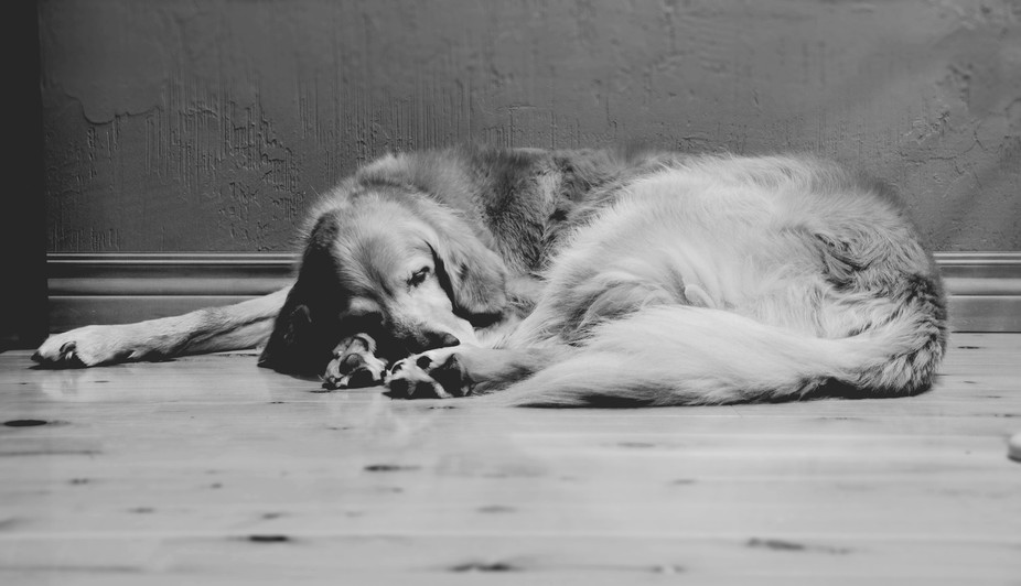 What dogs do best...sleep and dream and pose for great pictures!
