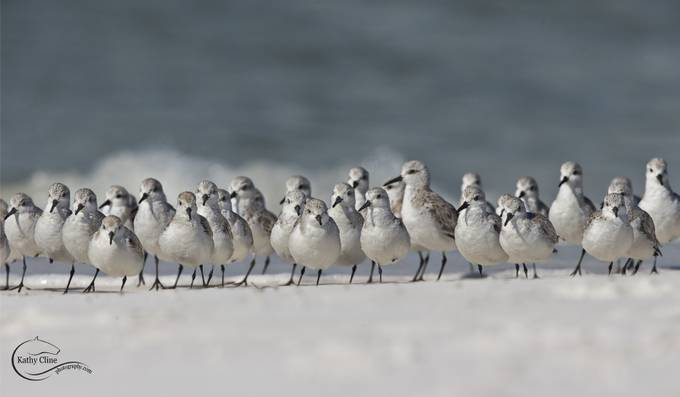 TheFlock72 by kathycline - More Of The Same Photo Contest