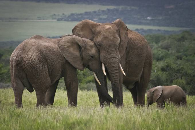 Family Values by bitterer - Big Mammals Photo Contest