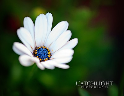 Blue, yellow & white beauty