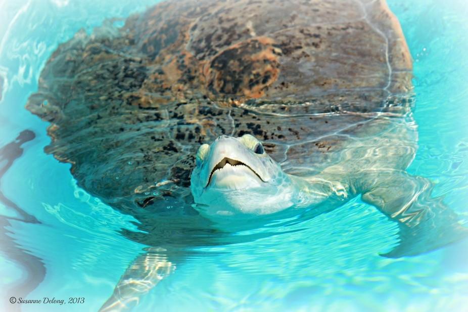 35.Sea Turtle