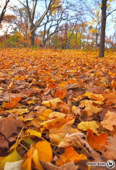 Fall Leaves [Hideki Aono]