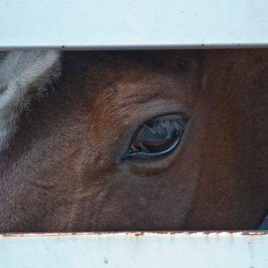 "View out of horse trailer ""window""."
