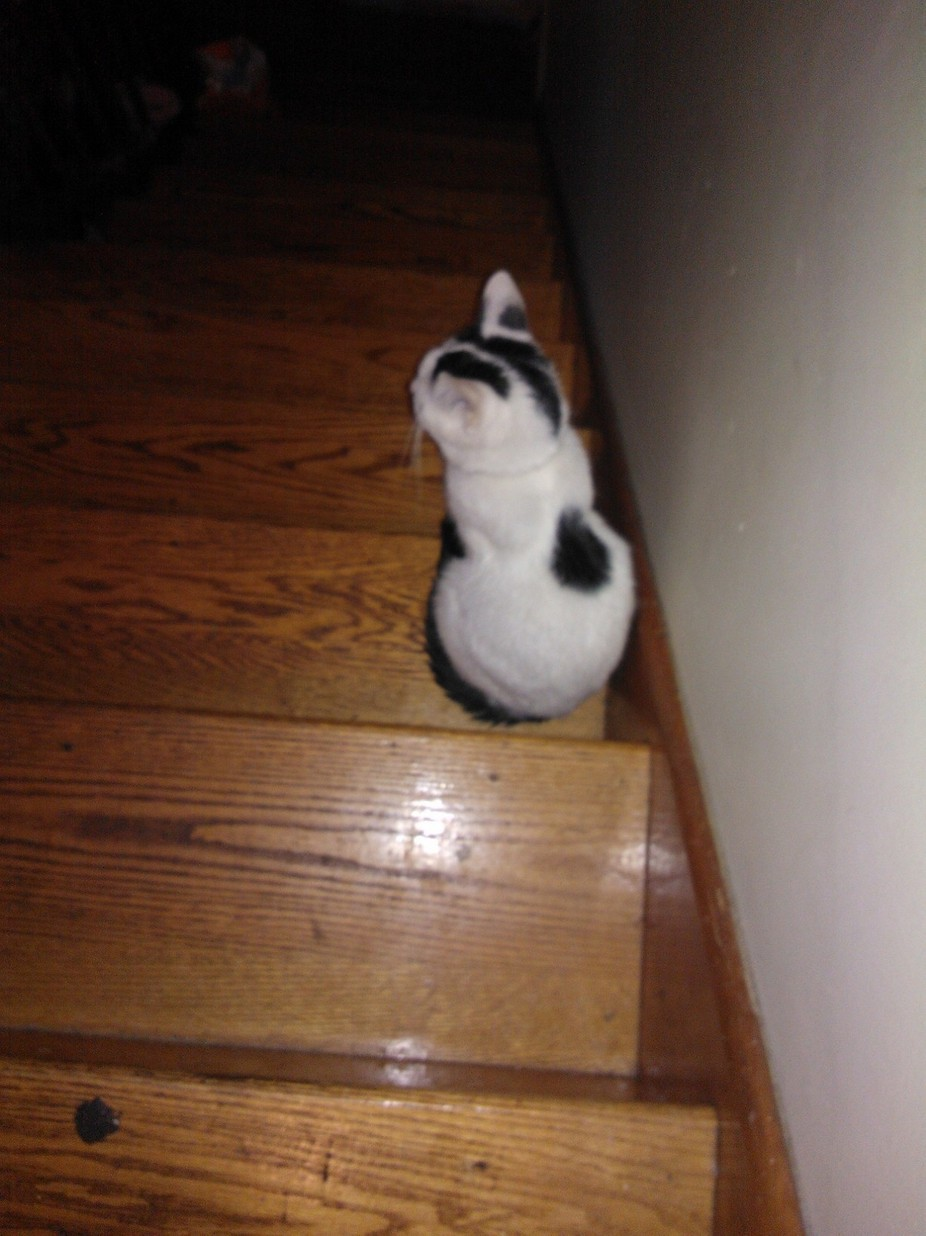 Cat in Stairwell