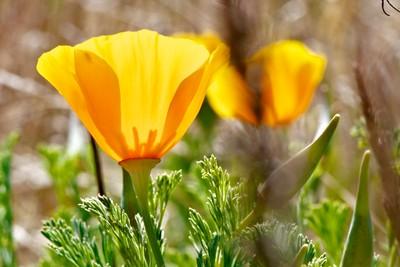 sunlight thru the flower
