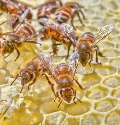 BeesOnComb