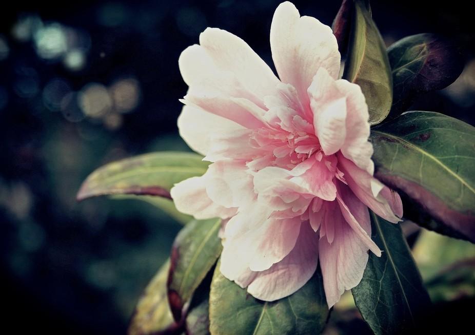 Harrogate Flowers
