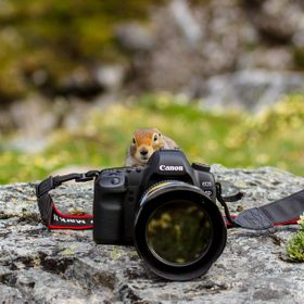 I captured this playful arctic ground squirrel while hiking in Denali National Park and Preserve. His/her antics included attempting to use my 5D...