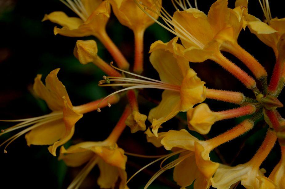 botanical flowers 200