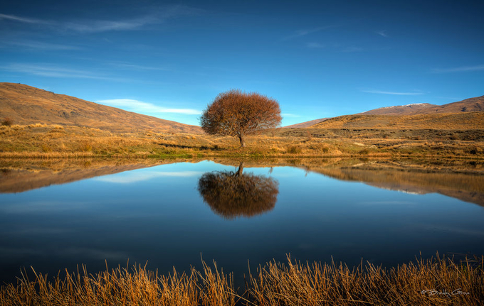 Nevis Tree by Brad_Grove