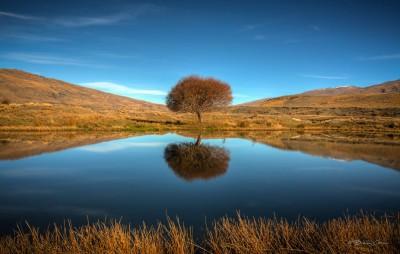 Nevis Tree