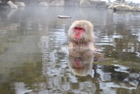 Snow Monkey Magic