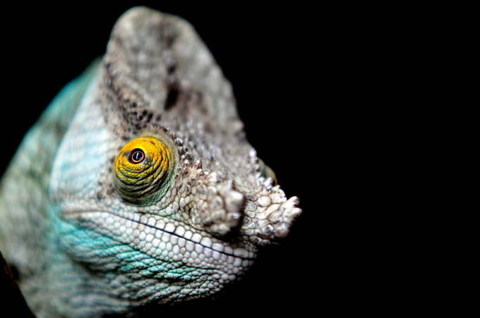 eye on the world by sully1364 - Reptiles Photo Contest