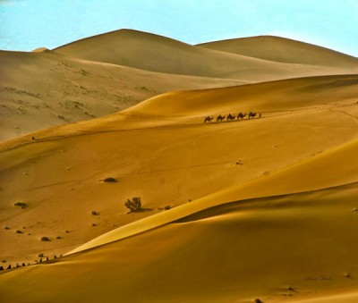 Camels-and-dunes