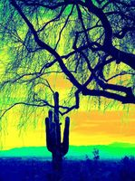 Tree and Cactus by DedaCreations by DeDa