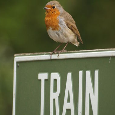 Which way to the train Robin?