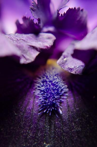 Stigma of Iris