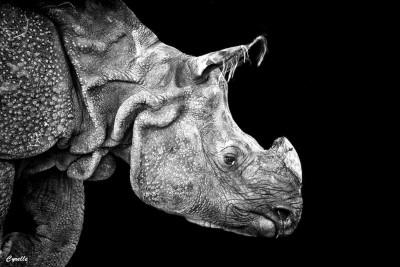 Rhinoceros at Higashiyama Doubutsuen, Nagoya, Aichi, Japan
