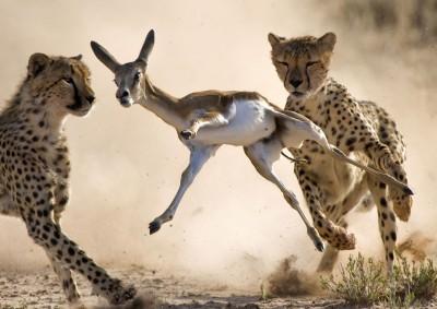 It's A Wild World Photo Contest Winners Revealed