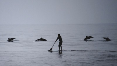 Paddle Boarding with the Dolphins