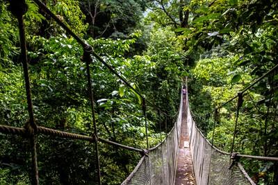 bridge in the rainforest