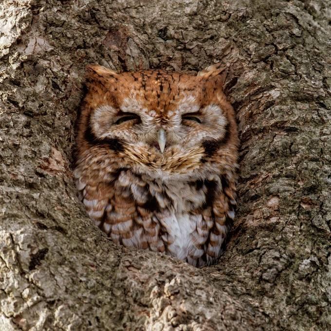 Sleepy in the Sun by HaliSowle - Hiding Photo Contest