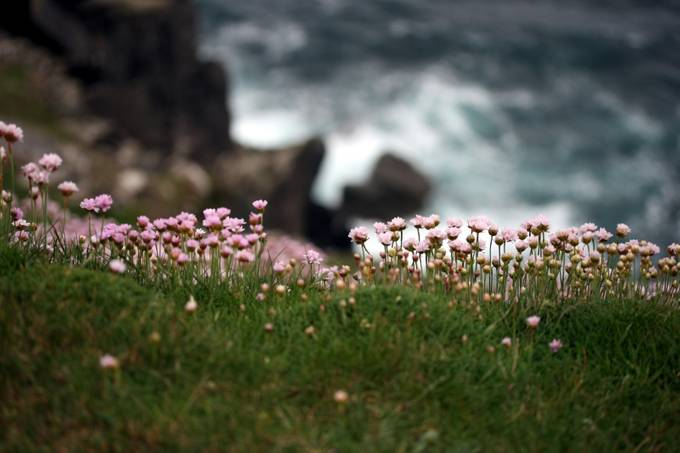 tiny flowers by pamramseycorey - Spectacular Cliffs Photo Contest